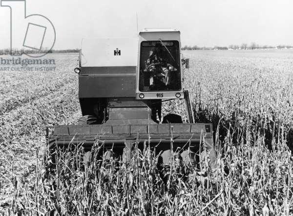 INTERNATIONAL HARVESTER An International Harvester tractor in an American cornfield. Photograph, c.1971.