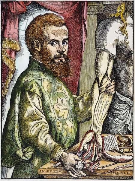 ANDREAS VESALIUS (1514-1564) Belgian anatomist. Woodcut from the first edition of 'De Humani Corporis Fabrica,' Basel, 1543.
