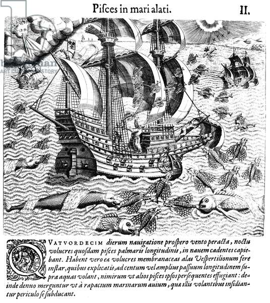 FLYING FISH, c.1548 Flying fish, attempting to escape predators, fall on the deck of a Portuguese ship in West Indian waters, 1547-48. Line engraving, 1592, by Theodor de Bry.