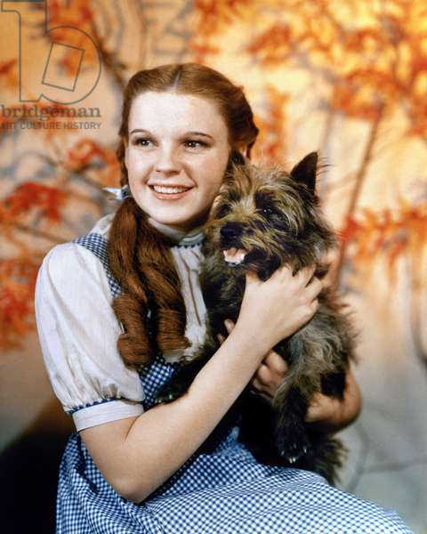 WIZARD OF OZ, 1939 Judy Garland as Dorothy, with her dog Toto, in the 1939 film 'The Wizard of Oz.'