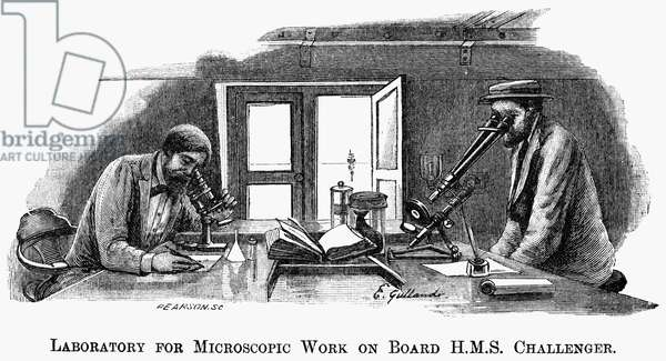HMS CHALLENGER SCIENTISTS Scientists at work during the cruise (1872-76) of the British survey ship HMS Challenger. Wood engraving, 1895.
