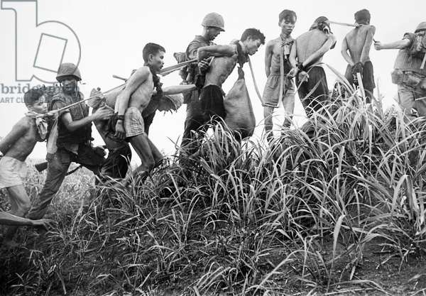 VIETNAM WAR: PRISONERS A coffle of Viet Cong prisoners being led and guarded by U.S. Marines near Da Nang, Vietnam, November 1965.