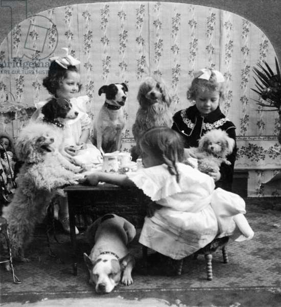 TEA PARTY, c.1906 A posed studio portrait of three girls having a tea party with six dogs. Stereograph, c.1906.