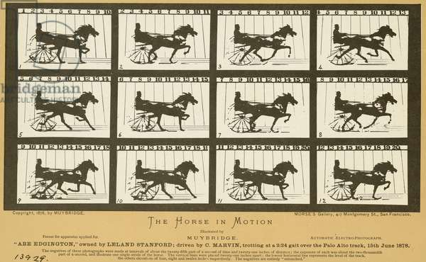 EARLY PHOTOGRAPHY, 1878 One of Eadweard Muybridge's 1878 photographic studies of a horse in motion at Palo Alto racetrack, California. The study, sponsored by Leland Standord, was made with a row of cameras activated when the horse ran through and broke the string running from track to camera.
