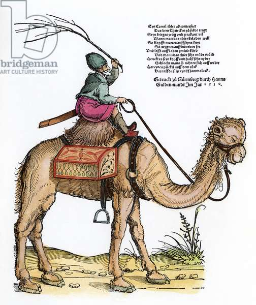 MAMLUK ON A DROMEDARY Woodcut, German, 1530, by Erhard Shoen.