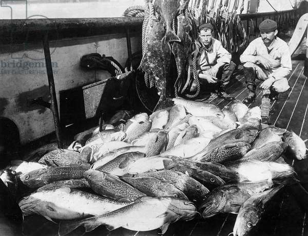ALASKA: FISHERMAN, c.1920 Two commerical fishermen with halibut and codfish on a fishing boat in Alaska. Photograph, c.1920.