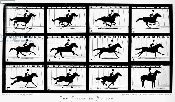 MUYBRIDGE: HORSE Eadweard Muybridge's 1878 photographic study of a horse in motion at Palo Alto racetrack, California. The study, sponsored by Leland Stanford, was made with a row of cameras activated when the horse ran through and broke the string running from track to camera.
