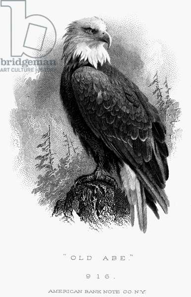 BALD EAGLE, 1870 'Old Abe,' the bald eagle which was the mascot of the Eight Wisconsin Regiment during the American Civil War. American banknote engraving, c.1870.
