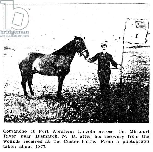 CUSTER'S HORSE COMANCHE Comanche at Fort Abraham Lincoln across the Missouri River near Bismarck, North Dakota, after his recovery from the wounds received in battle. From a photograph taken about 1877.