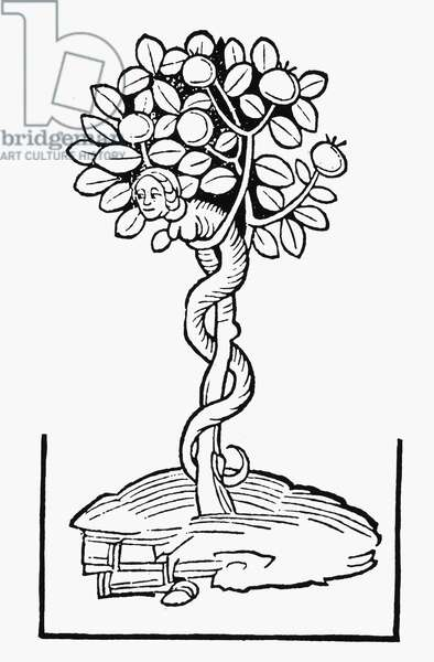 ADAM & EVE The Tree of Knowledge. Woodcut from Meydenbach's 'Ortus Sanitatis,' Mainz, Germany, 1491.