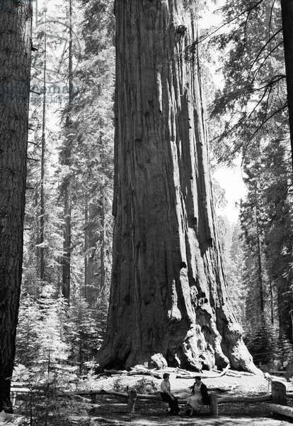 SEQUOIA NATIONAL PARK Two tourists sitting beside a giant sequoua tree named General Sherman after American Civil War general, William Tecumseh Sherman in Sequoia National Park, California. Photograph, c.1950.