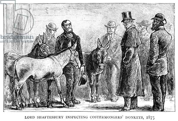 EARL OF SHAFTESBURY (1801-1885). Anthony Ashley-Cooper, 7th Earl of Shaftesbury. English politician, reformer, and philanthropist. Lord Shaftesbury inspecting the donkeys of fruit and vegetable vendors in London, 1875. Wood engraving from an illustrated biography published in 'The Graphic' after his death, 1885.