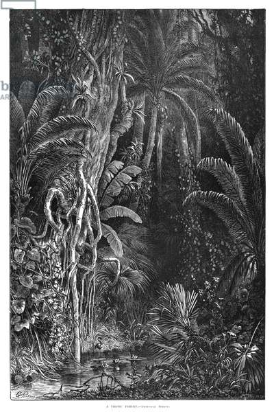 FOREST, 1872 'A Tropic Forest.' Engraving by Granville Perkins, 1872.