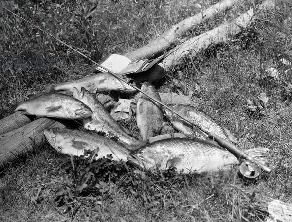 YOSEMITE: FISHING, 1902 A fisherman's catch of the day at Yosemite Valley, 1902.