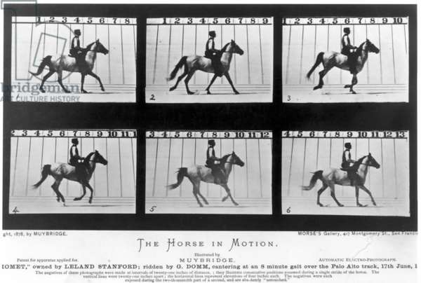 HORSE IN MOTION, 1878 Eadward Muybridge's 1878 photographic study of a horse in motion at Palo Alto racetrack, California; the study, sponsored by Leland Stanford, was made with a row of cameras activated when the horse ran through and broke the string running from track to camera.