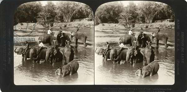 CEYLON: ELEPHANTS, 1907 'Elephant keeps driving a herd of huge beasts into a river to drink, Kandy, Ceylon.' Stereograph, c.1907.
