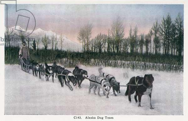 ALASKA: DOG SLED, c.1930 A dog sled team in Alaska. Postcard, American, c.1930.
