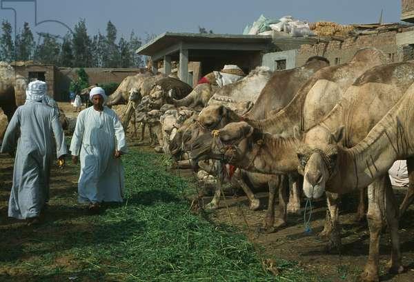 Camel market, Birqash, 2000 (photo)