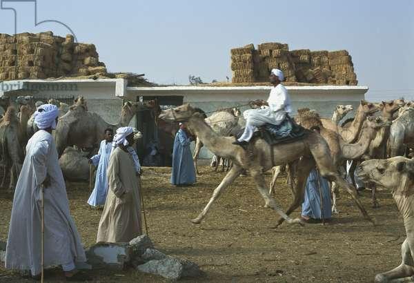 Camel market, Birqash in 2000 (photo)
