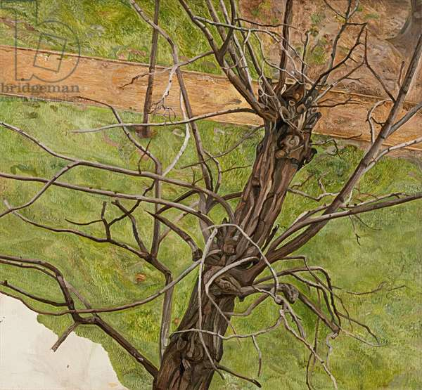 Acacia, 1975 (oil on canvas)