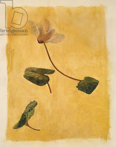 Cyclamen, c.1955 (wall painting on plaster)