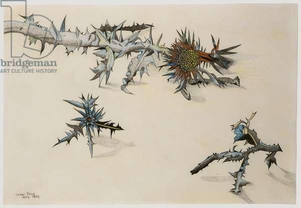 Scotch Thistle, 1944 (conte, pencil & crayon on paper)
