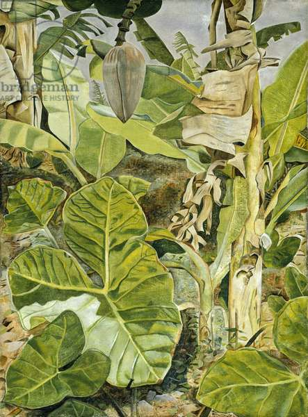 Plants in Jamaica, 1953 (oil on canvas)