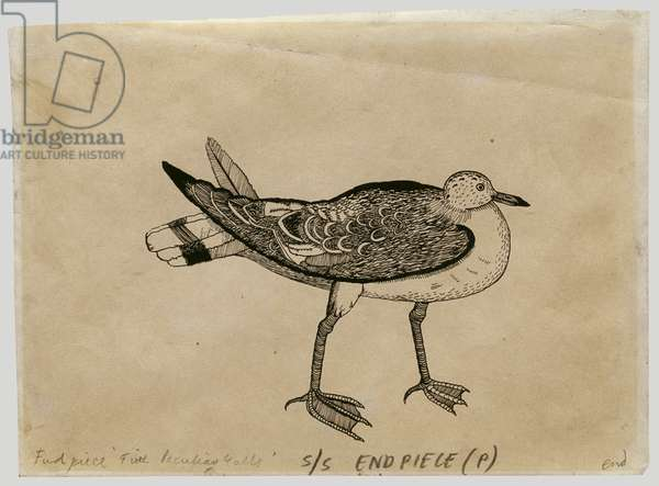 A Peculiar Gull, 1944 (ink on paper)