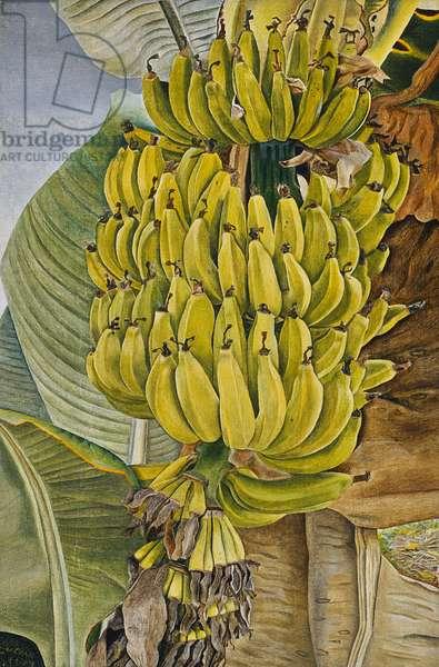 Bananas, 1952 (oil on canvas)
