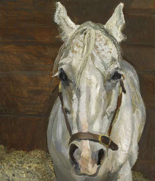 Grey Gelding, 2003 (oil on canvas)