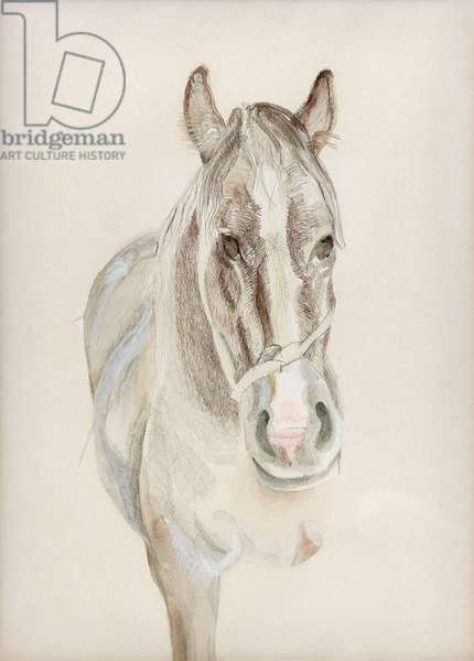 A Filly, 1969 (pencil, crayon & w/c on paper)