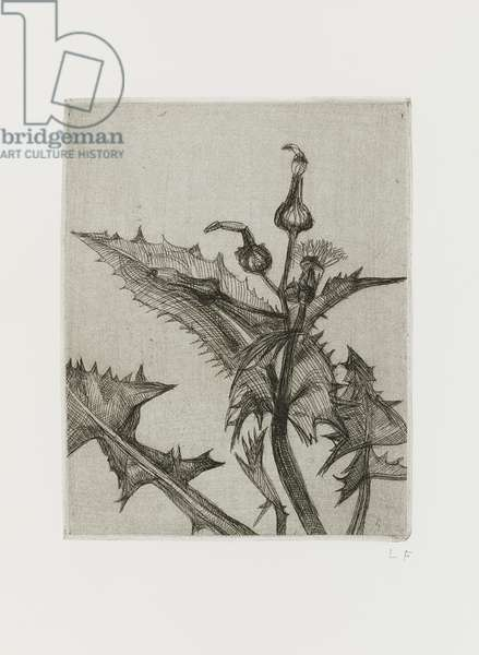 Thistle, 1985 (etching)