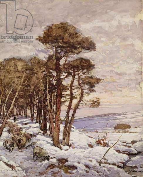 Sheep Path in Winter