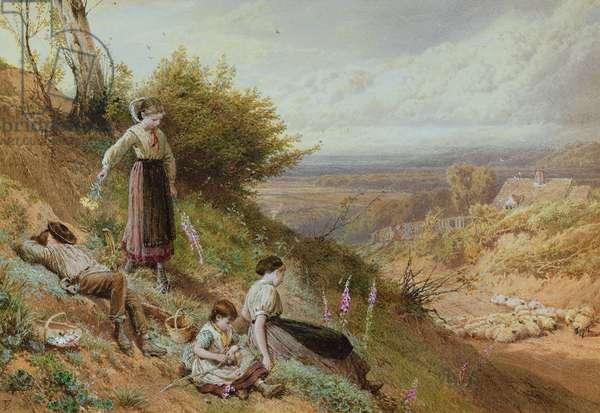 The Hillside (Gatherine Foxgloves) (w/c on paper)