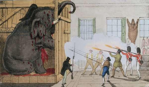 Destruction of the noble elephant at Mr Cross's Exeter Change, 1826 (colour litho)