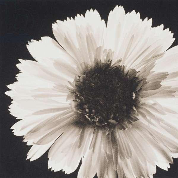 Single flower on black background