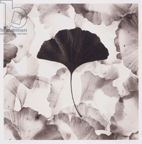 Composition of ginkgo leaves,