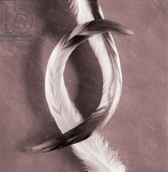 Two curved bird feathers