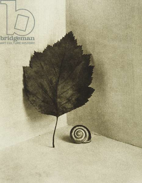 Leaf and snail shell