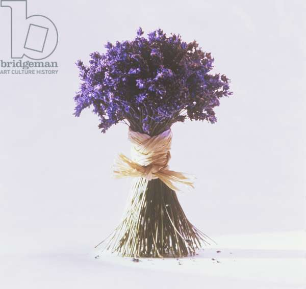 Bunch of lavender tied with raffia