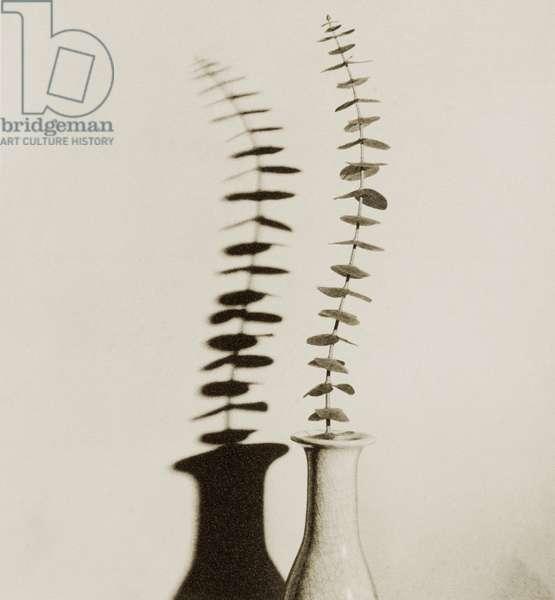 Eucalyptus Leaves in Vase