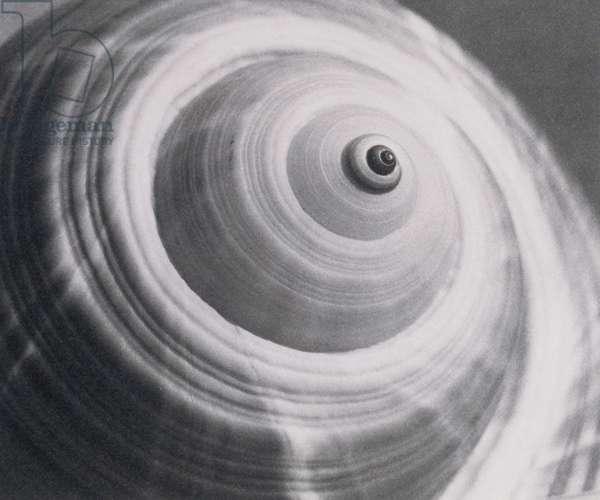 Spirals on Shell