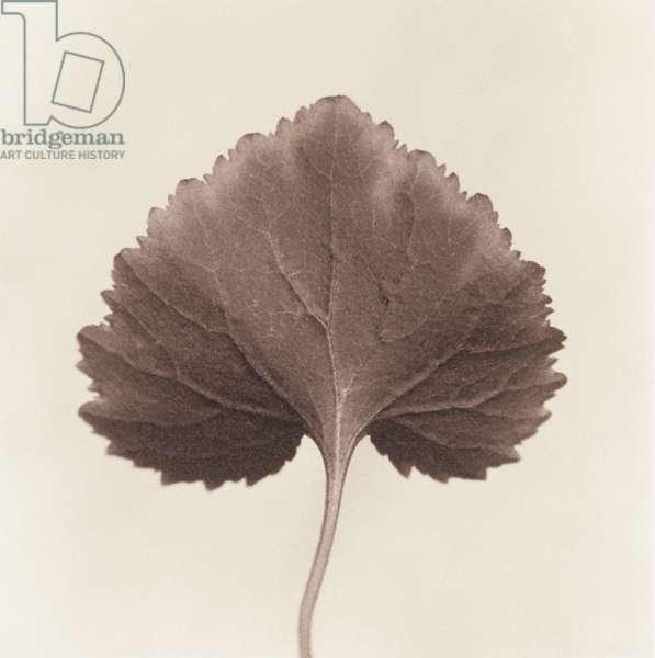 Single leaf on white background