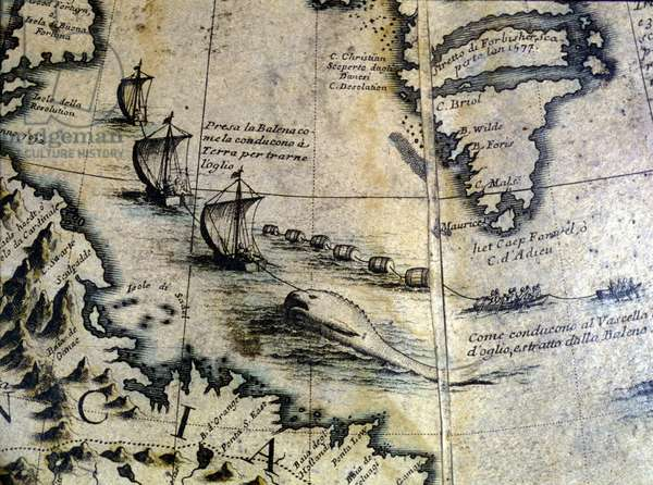 Whaling: the whale is brought ashore to extract oil. From Coronelli's globe. 17th century.