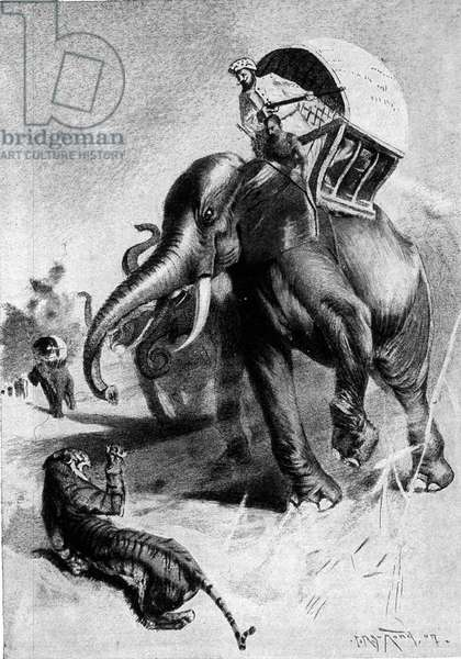 Tiger hunting: two hunters with the back of elephant.