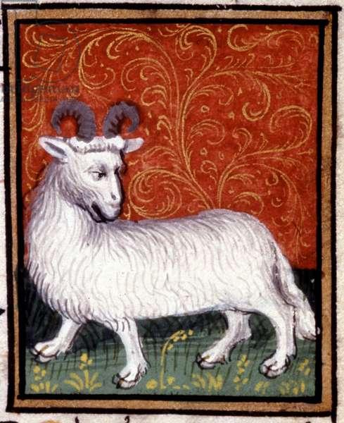 The Aries. Miniature of a horoscope. 15th century manuscript. Bibl. Trivulziana, Milan.
