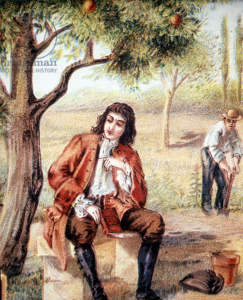 Isaac Newton (1642-1727), English mathematician, physicist and astronomer, finds the theory of gravitation by observing the fall of an apple tree, an illustration of the 19th century.