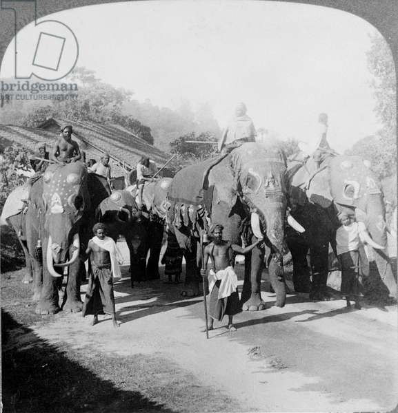 Buddhist procession with new rice offerings on the occasion of the feast of the Perehera (relic of the Buddha tooth) at the Temple of the Buddha Tooth. Kandy. Ceylon (present-day Sri Lanka) Photography of 1903