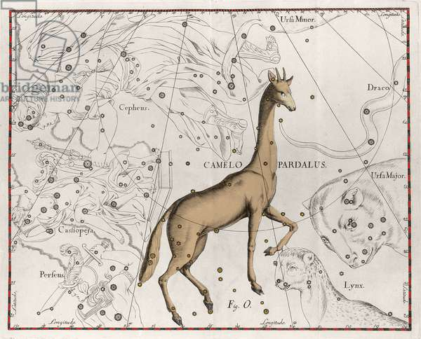 "The constellation of the giraffe Plate taken from """" Firmamentum Sobiescanum sive Uranographia"""" by Johannes Hevelius or Hevel (1611-1687), 1690."