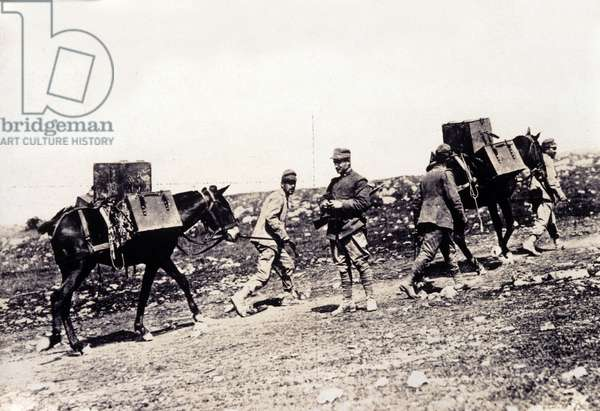 First World War: group of Italian Alpine hunters with their mules in 1915